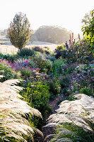 Morgenlicht im naturnahen Garten mit Stauden