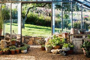 Mediterrane Deko im Gewächshaus mit Zierpflanzen in Terracottatöpfen