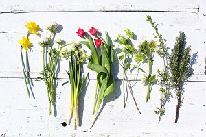 Narcissus, ranunculus, tulips, viburnum, hellebore and rosemary