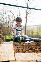 Boy sitting on raised bed planting lettuces