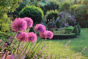 Garden with alliums, box hedges, box cones and roses