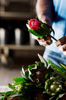 Protea Obtusifolia flowers