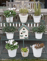 Plants in white pots and bird nesting box on plant stand