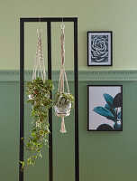Houseplants in macrame plan holders