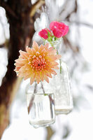 Dahlia and roses edged with frost in suspended bottles