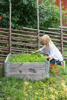 Woman working in raised bed in front of Scandinavian fence in garden