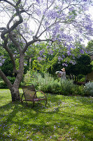 Purple-flowering tree in idyllic summery garden