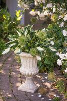 Amphore mit Herzblattlilie und Samenstände vom Zierlauch