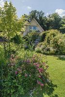 Blick über Beete mit Rosen und Rasenfläche aufs Haus