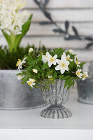Posy of wood anemones