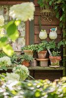 Blick auf Gartenhütte mit Sammlung von Mini-Hosta in Tontöpfen