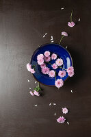 Pink asters in blue bowl