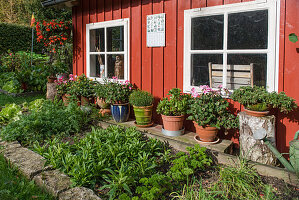 Red summerhouse with vegetable patch and potted plants