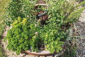 Altes Wagenrad als Kräutergarten bepflanzt