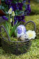 Körbchen mit weißer Traubenhyazinthe, Primelblüte und Ostereiern als Osternest