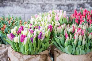 Tulpen als Schnittblumen für den Verkauf