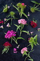 Sweet Williams (Dianthus barbatus) on dark surface