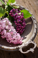 Lilac flowers in silver dish