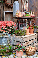 Autumnal arrangement of chrysanthemums, teaberry, candle lanterns and basket of walnuts