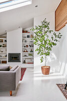 Potted tree, fireplace and shelves in white living room