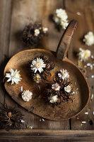 Strohblumen (Helichrysum) und Baumhasel-Fruchtstand (Corylus Colurna)