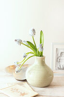 Posy of grape hyacinths