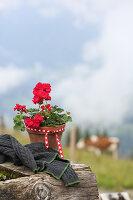 Rote Geranie im Blumentopf mit Dekoband auf Baumstamm