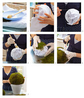 Instructions for making moss balls