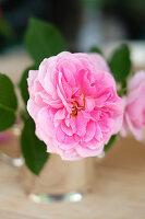 Pinke Rosenblüte