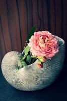 Rose in ceramic nautilus shell