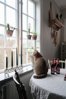 Cat sitting on table next to window with window shelves in rustic kitchen