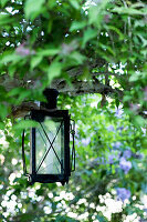 Lantern hanging from branch