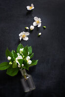 Fragrant posy of mock orange