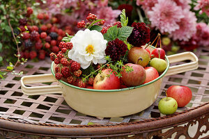 Schüssel mit Äpfeln, Dahlien und unreifen Brombeeren
