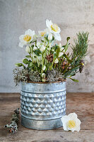 Hellebore, pine twigs and lichen in metal pot