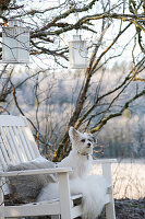 Small dog sitting on white-painted wooden bench below lanterns hung in tree in wintry garden