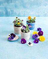 Essbare Blüten: Stiefmütterchen und Hornveilchen