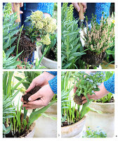 Herbstbepflanzung austauschen gegen Frühlingsbepflanzung