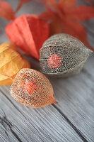 Getrocknete Lampionfrüchte mit sichtbarer Beere