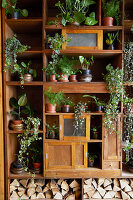 Various green plants on an old shelf