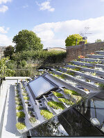Planted trays of green roof and skylight window