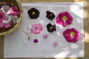 Hollyhock, mallow and marsh mallow flowers