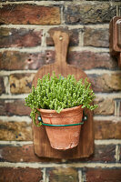 Potted plant on brick wall