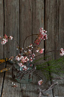 Branches of Bodnant viburnum in glass vase against rustic wooden wall