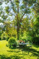 Tisch mit Stühlen unter Baum im Garten