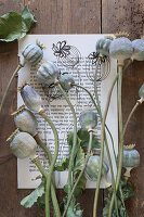 Poppy seed heads on painted book page