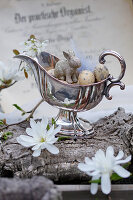 Silberne Sauciere mit Ostereiern und Osterhase, Blüten von Sternmagnolie und Felsenbirne