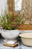 Plant in tureen shape, bowl and soap on old table