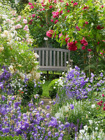 Wooden bench next to picturesque bed of roses ('Laguna', 'Ghislaine de Féligonde') and campanula