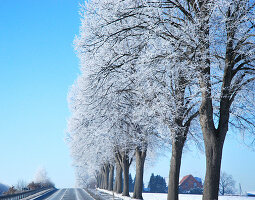 Trees covered in hoar frost along country road